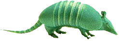 Armadillo Auto Glass